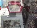 Kastration von 3 Dorfkatzen 7.6.2016