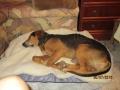 Uschko auf seinem weichen Bett im Katzenzimmer 30.7.2016 1