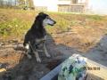 Kiko Alter Strassenhund 31.3.2016 3