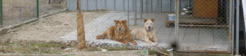Tierhilfe Bulgarien – Schweiz